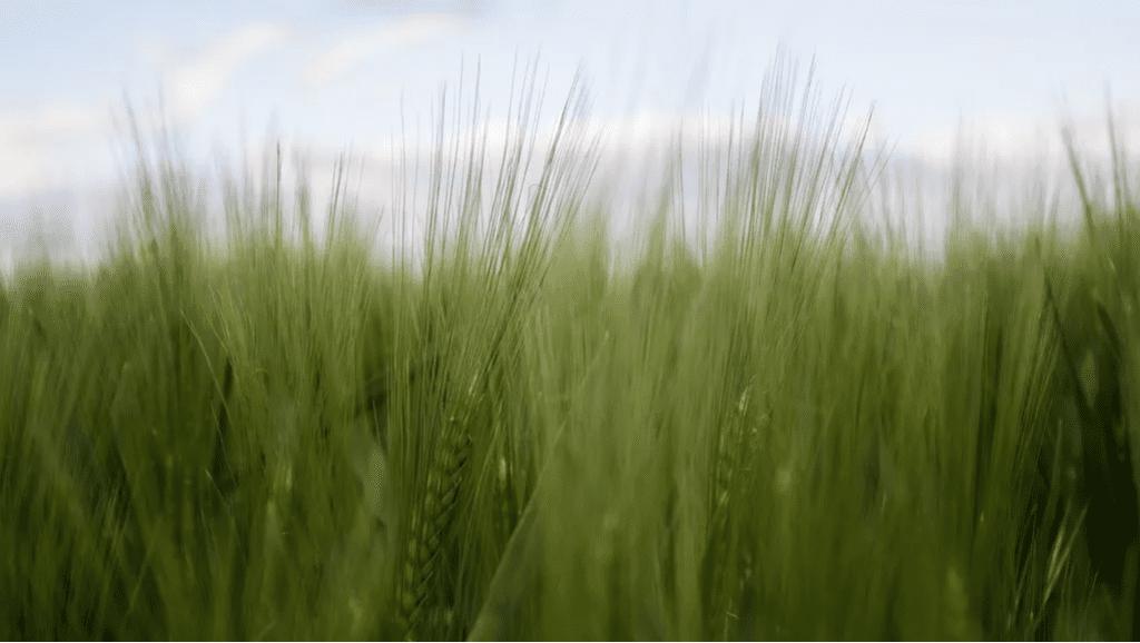 La economía circular es clave para una producción más verde.PIXABAY