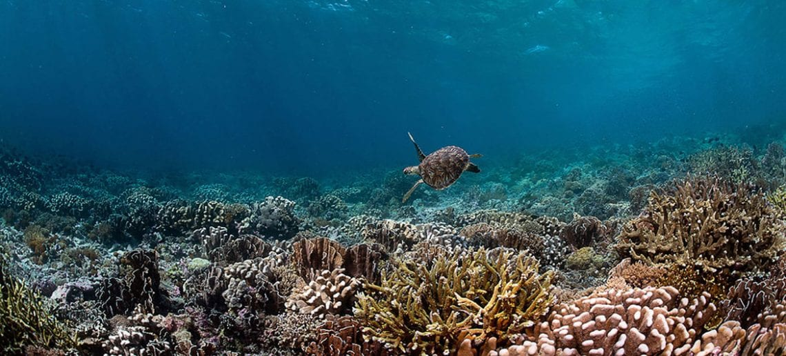 Coral Reef Image Bank/Tracey Jen